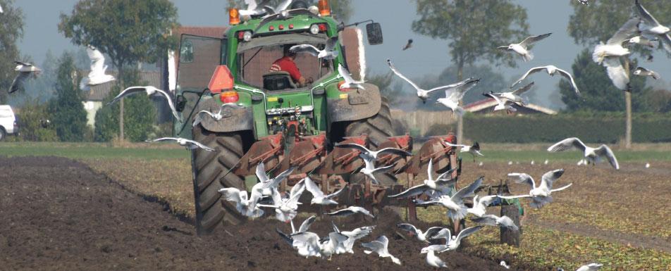 slider-2-rode-bieten-agro