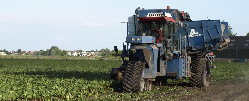 slider-3-rode-bieten-agro